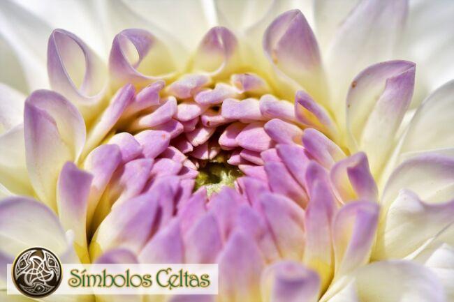 Significado de la flor de la dalia
