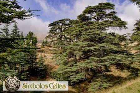 El cedro libanés