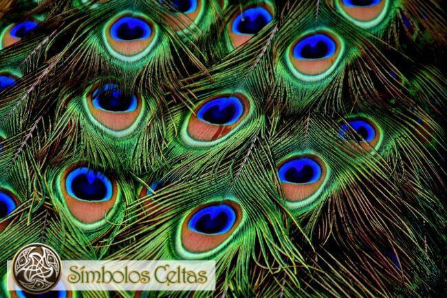 El símbolo de la cola y plumas del Pavo Real