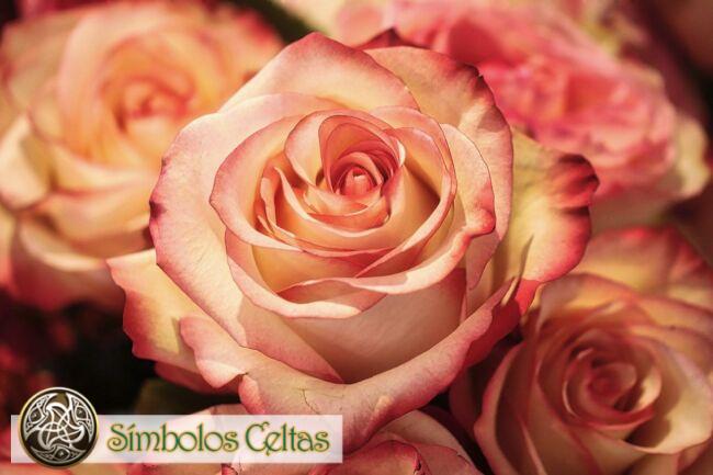 Significado de la flor de rosa