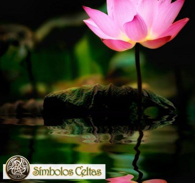 Tatuaje de la flor de Loto