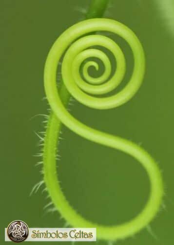 Significados simbólicos de la forma espiral
