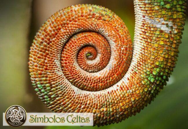 La Espiral en la naturaleza
